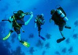 Roatan 1 Tank Shore Dive, Sloth & Monkey Park, City Tour plus Transportation