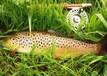 Beginners:Wild Brown Trout fly fishing lesson on a Connemara lake.Guided.