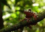 5 Days Exploring the Amazon Rainforest | Tour From Quito to Napo, Ecuador
