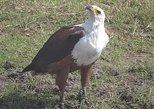 Birding Safari Tour.