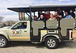 Budget 2 Days 1 Night Kruger Safari + 3 Star Lodge from Johannesburg or Pretoria