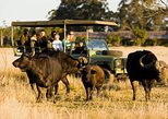 2-Hour Game Drive at the Plettenberg Bay Game Reserve