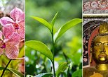 Flowers, Tea and Temples