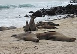 Galapagos Experience - 6 day - includes Air ticket