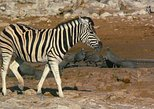 Etosha Private Safari 5days/4nights