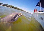Disappearing Island Dolphin Tour