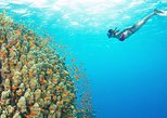 Pacific Boat - Premium snorkeling tour by speedboat with small group!