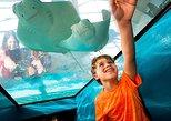 Newport Aquarium Admission With Free 5 X 7 Photo Included