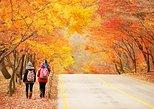 Autumn 8 days South Korea Tour including Jeonju,Damyang,Mt.Naejangsan