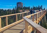 Treetop Walk Bachledka in Slovakia & Zakopane- PRIVATE tour from Krakow