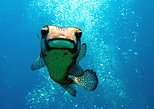 10 Dive Package Boa Vista