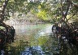 Mangrove tunnel and Garifuna culture tour