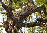 Essential Kruger Safari package