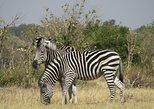 Africa & Mid East - Botswana: Chobe Day Safari Trip from Livingstone (with Buffet Lunch)
