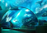 sea life bangkok ocean world tunnel ticket