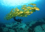 Discover Scuba Diving Experience for Beginners with MANTA