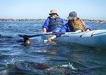 Pelican Point Kayaking / Sandwich Harbour 4x4 Combo Tour