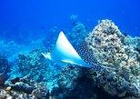 Cozumel 3 reefs snorkel: Dzul-Ha, Cardona & San francisco reef