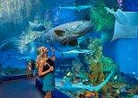 Australia & Pacific - Australia: Cairns Aquarium Admission Ticket