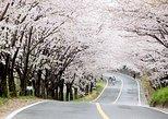 Spring 4 days Seoul&Mt Seorak Cherry blossom with Nami & Everland on 7 to 14 Apr