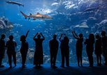 things to do indoors in tampa | explore the the florida aquarium