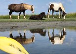 Guided Kayak Tour to see ponies, birds, dolphins and more