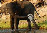 Africa & Mid East - Botswana: chobe 3hr boat cruise