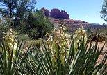 USA - Arizona: Four-Hour Sedona Vortex Tour