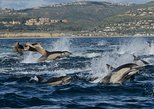 thrilling whale and dolphin-watching cruise