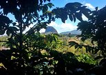 Guatape Rock Tour and a Coffee farm, all in one great day