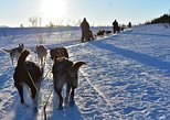 Dogsledding, Ice Domes visit, and reindeer feeding combination tour