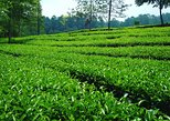 Private Multi-day Tour : Explore Bogor - Bandung 3D2N (Start from Jakarta)