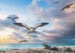 Seychelles Birding Experience
