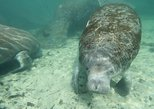 Manatee Snorkeling Tours in the beautiful Crystal River