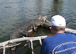 Swamp Tour, two hours, open crawfish skiff, see alligators/birds near Lafayette.