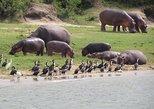 1 day Akagera safaris