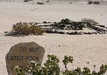 Moon Landscape And Welwitschia Half Day/Full Day Tour