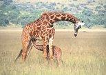 Akagera National Park - Game Drive
