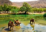 11 Days Tour Muscat and Salalah