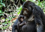 14-Day Ultimate Wildlife Safari