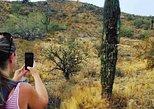 USA - Arizona: Sonoran Desert Hiking/ SOLO PRIVATE/ 1.5 hr/ Meet at Trail head/ SOLO PRIVATE
