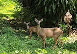 Atitlan Hiking and Birding - Day tour from Antigua