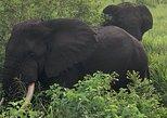 06 Days Budget Wildlife & Gorillas Tour Uganda