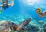 Caribbean Sea Life Snorkeling Tour