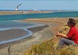 - Puerto Madryn, ARGENTINA