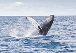Icy Strait Shore Excursion: Whale Watching Adventure Tour