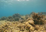 Caribbean - Aruba: Eco-friendly snorkel tour past a pristine coral reef