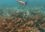 Caribbean - Aruba: Eco-friendly snorkel tour past a pristine coral reef