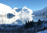 USA - Alaska: Winter - Wildlife & Turnagain Arm Tour