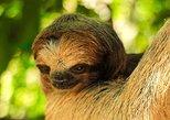 Monkey/Sloth Sanctuary And Beach Break